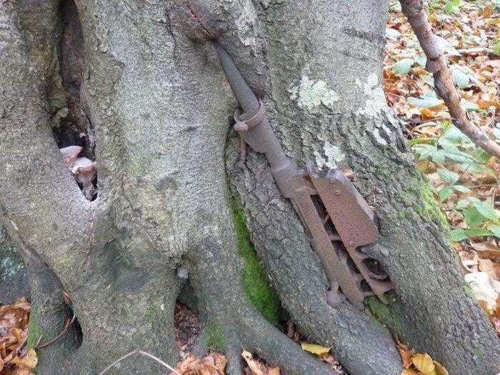 Старая военная техника против природы (13 фото)